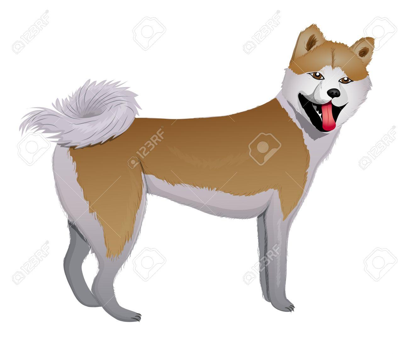Akita Inu Japanese Dog vector illustration eps 10 Stock Vector - 12491151