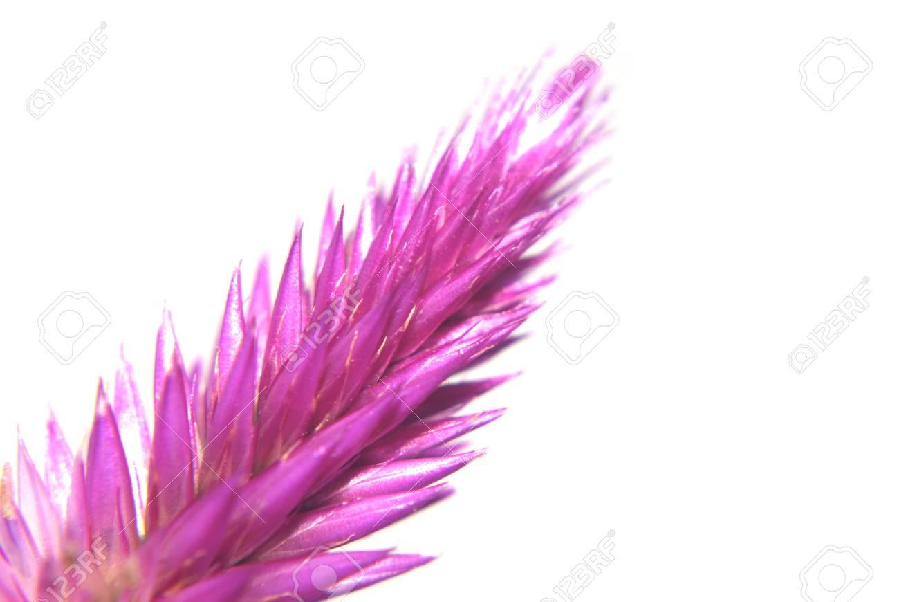 Exotic flower closeup - 2826110