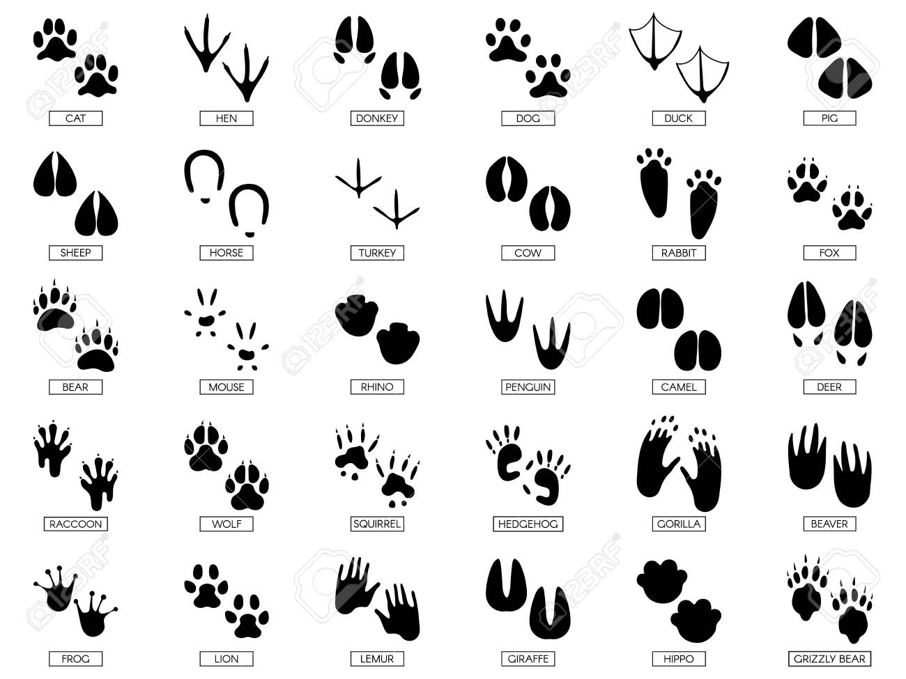 Animals footprints. Animal feet silhouette, frog footprint and pets foots silhouettes prints. Wild african animals paw walking track or footprint tracks. Vector illustration isolated sign set - 124396138