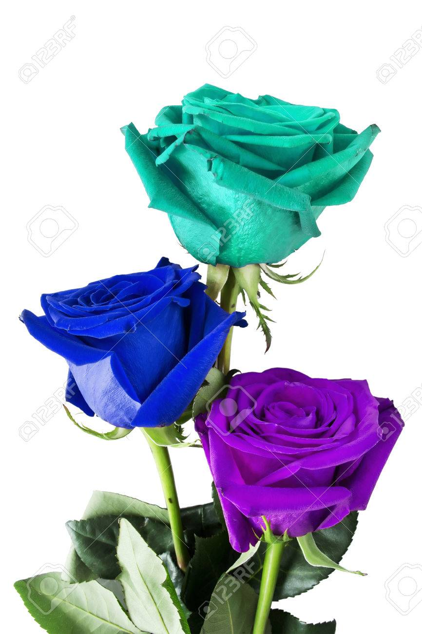 Bouquet Of Blue Cyan And Purple Roses On White Background Stock Photo