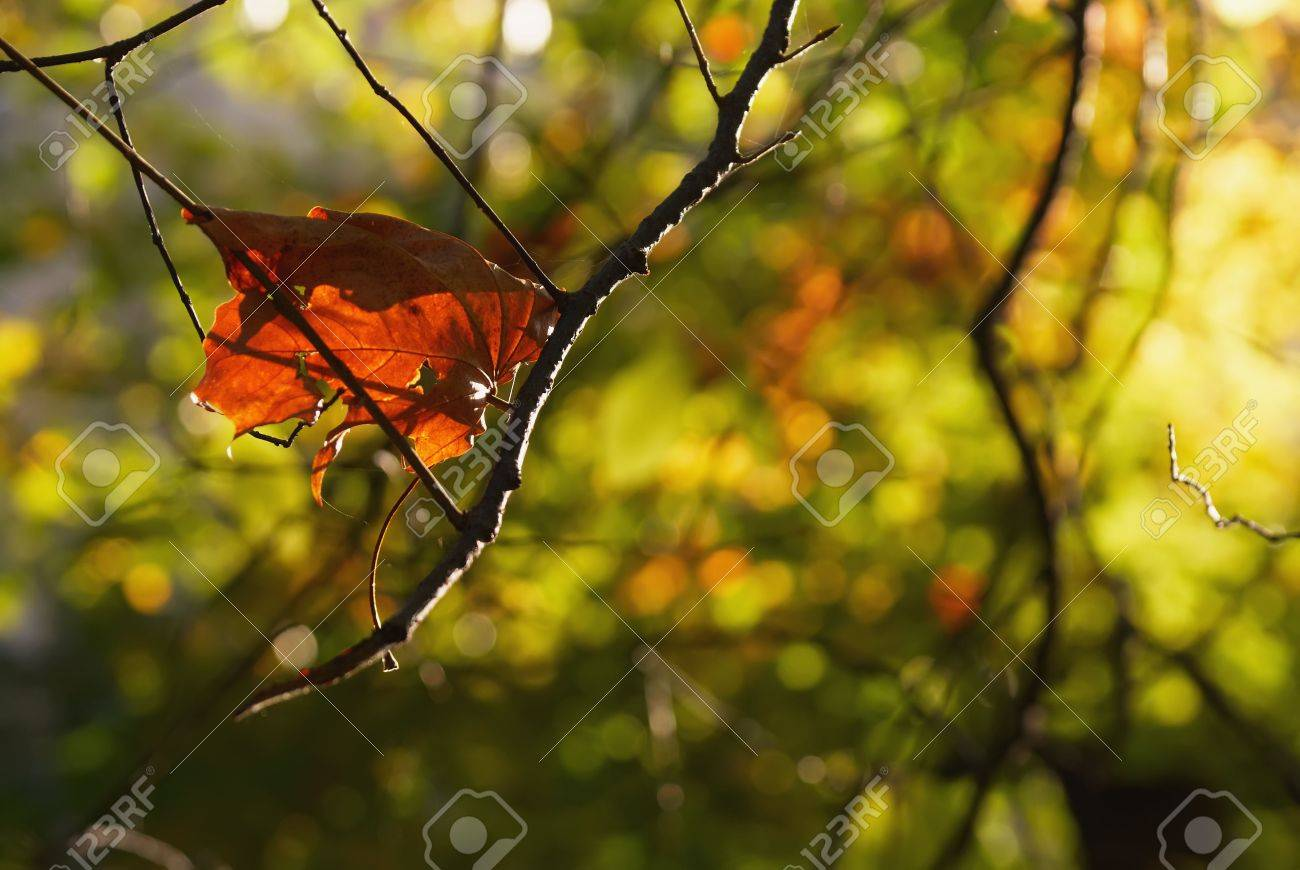 Be single autumn sheet on a branch on a background the green forest Stock Photo - 7957668