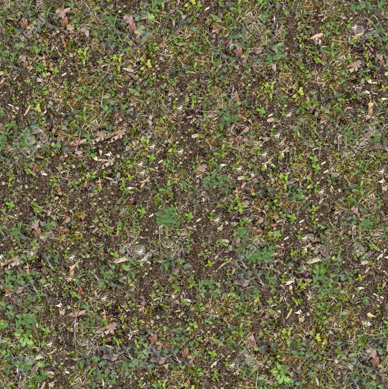 Young Green Plant on Soil. Seamless Tileable Texture. - 33574311