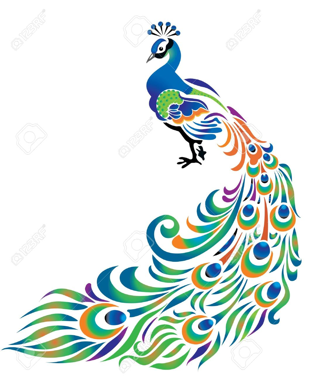 peacock with tail dissolved on the white background royalty free rh 123rf com peacock vector art peacock vector art