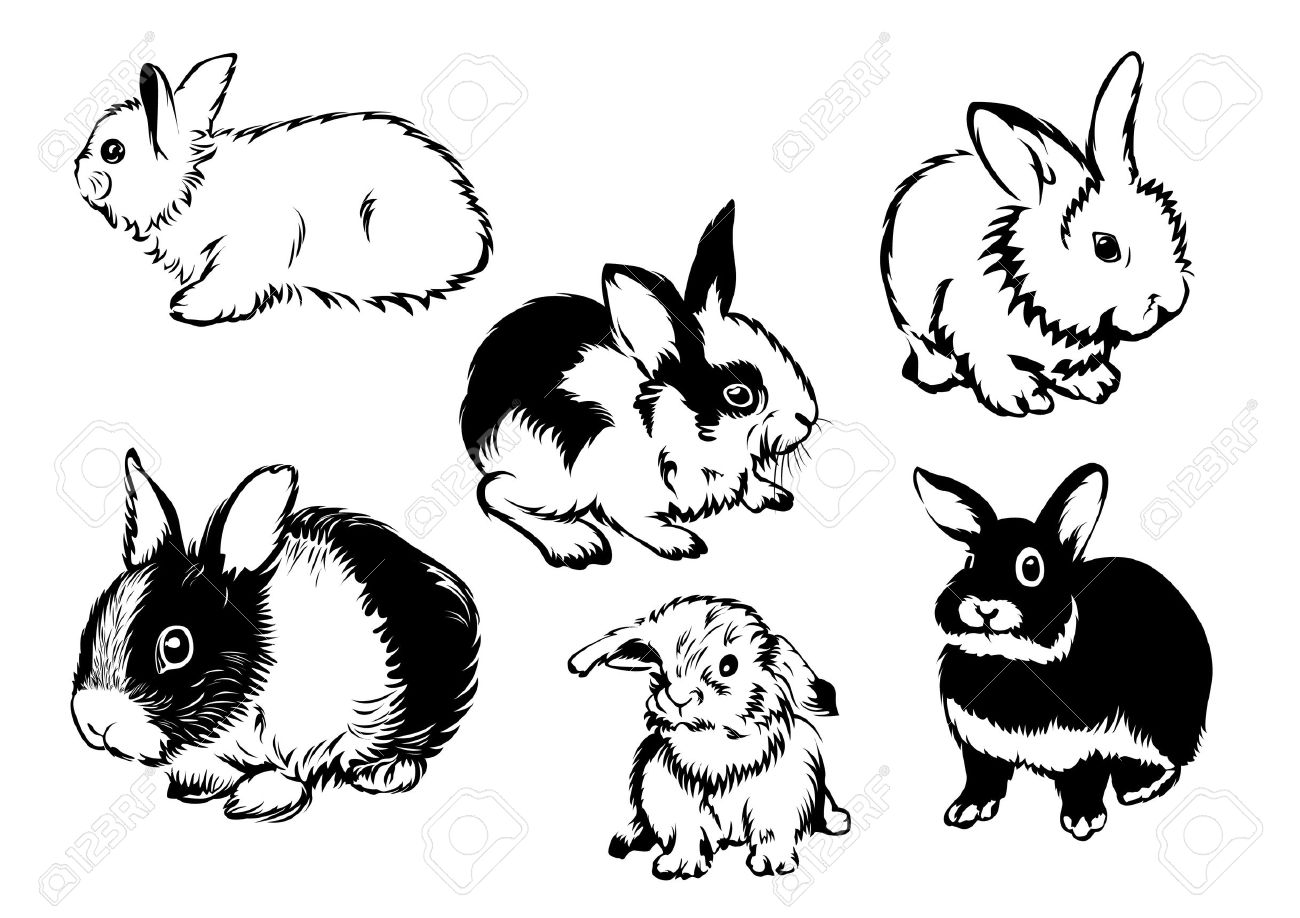 drawings of rabbits in various poses royalty free cliparts vectors