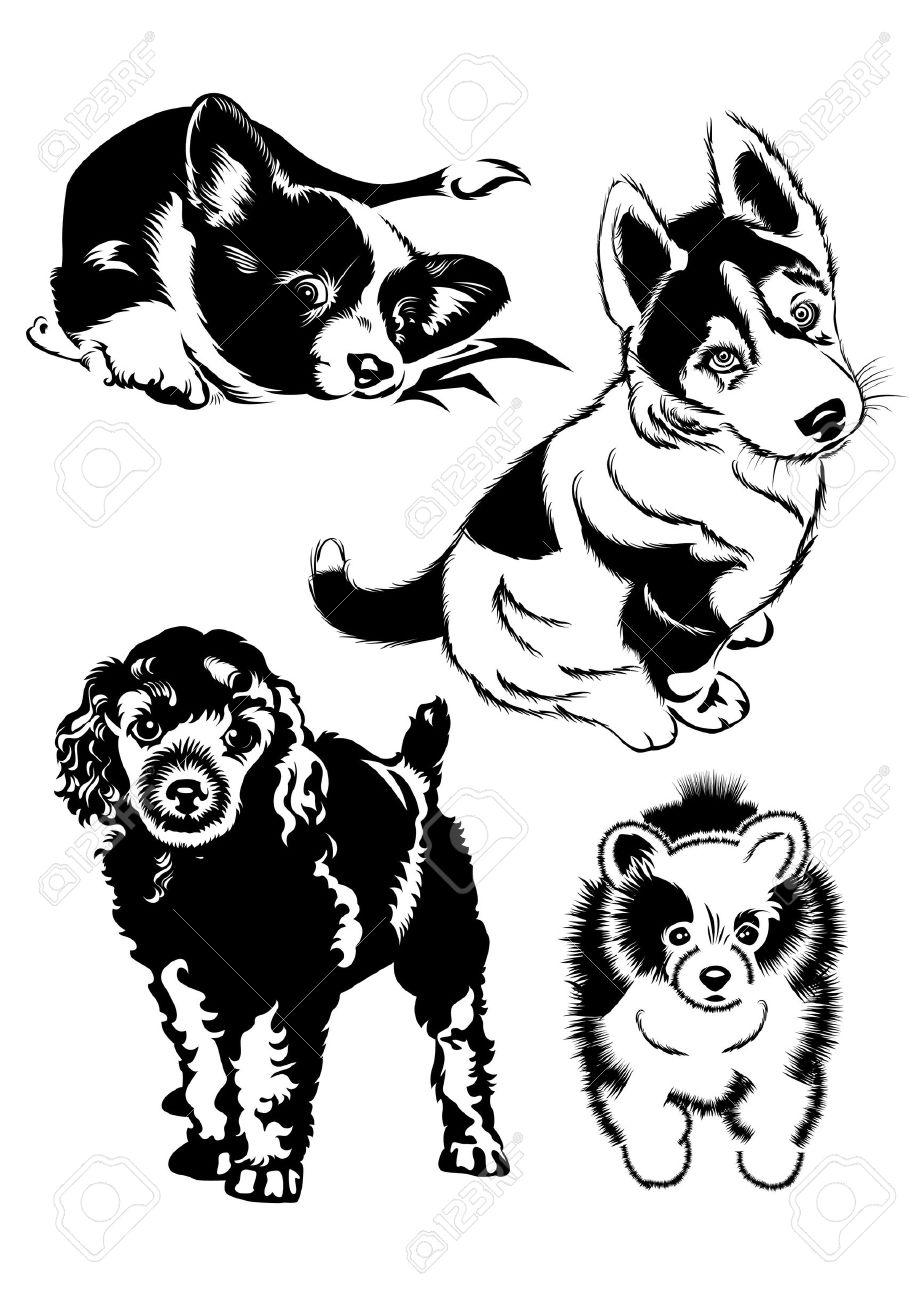 чёрно белые картинки собаки