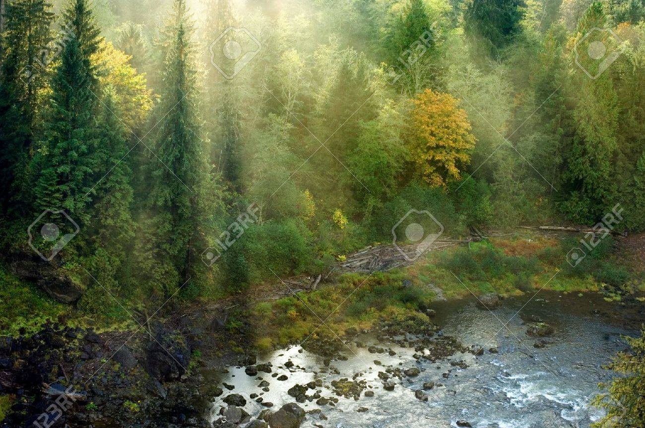 Evergreen forest in sun rays in Pacific Northwest, Washington Stock Photo - 2117793