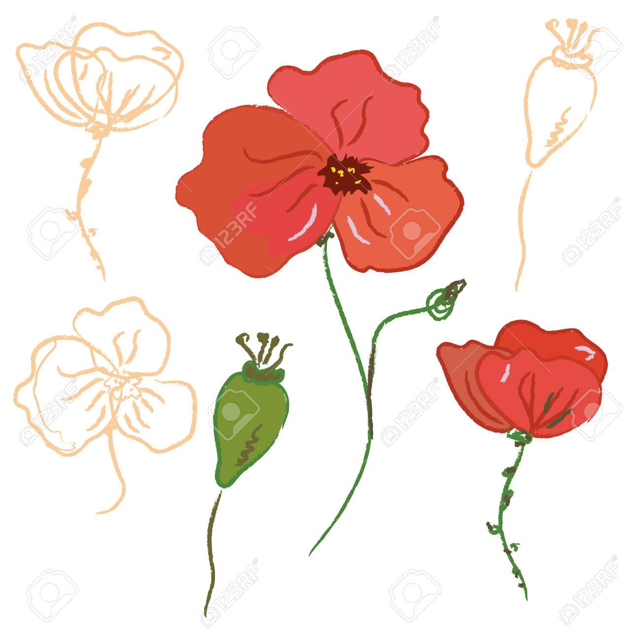 Sketch of poppy flower and seeds Stock Vector - 6779416