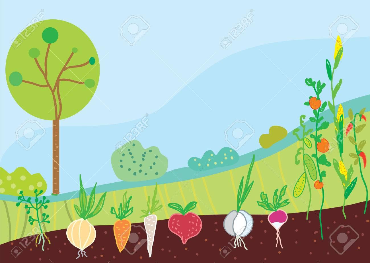 Garden in spring with vegetables background - 28078481