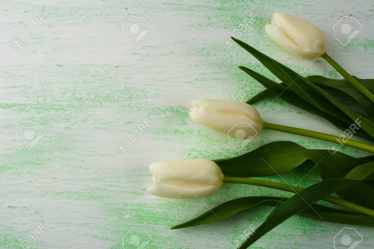 Fondo Fresco De Los Tulipanes Blancos Y Púrpuras. Marco De La Flor ...
