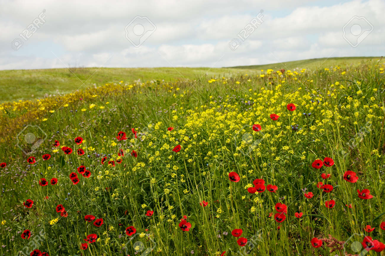 Wild flowers blooming in the spring steppe stock photo picture wild flowers blooming in the spring steppe stock photo 1565518 dhlflorist Choice Image