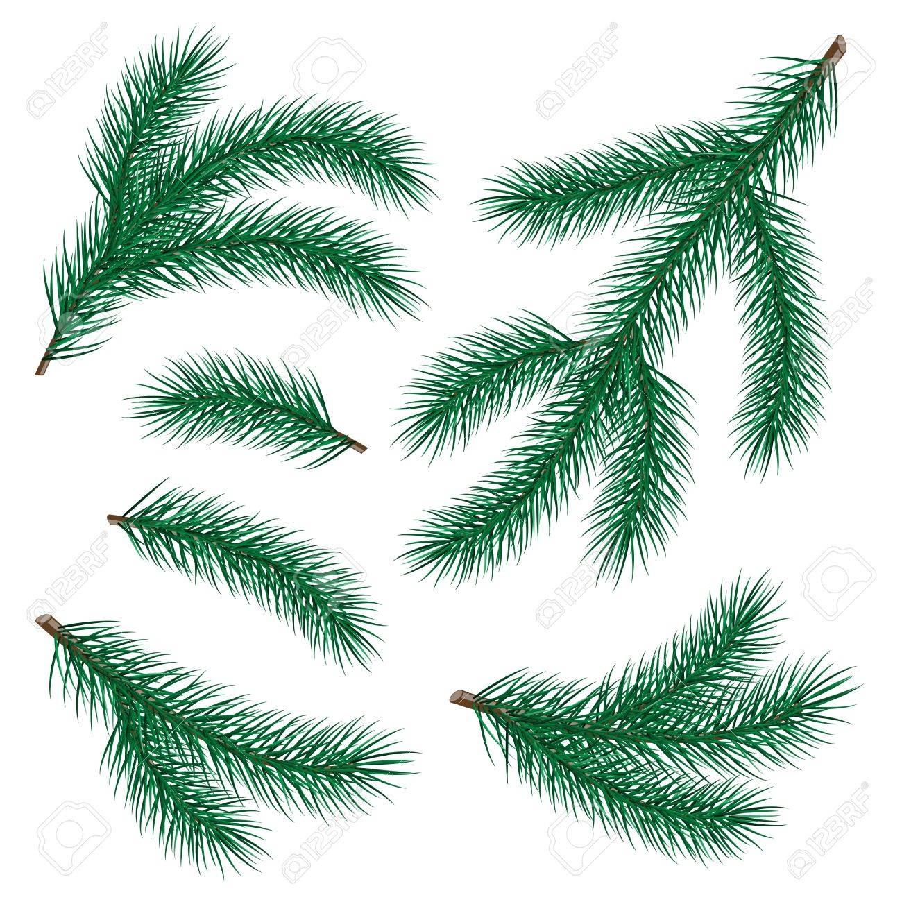 set of fir branch on white background  vector illustration Stock Vector - 16132955