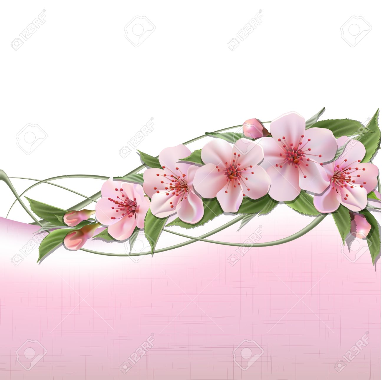 Spring Header With Pink Cherry Flowers Buds And Copy Space Royalty