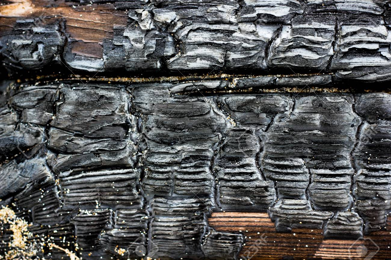Close Up Picture Of Burned Wood Coal Black And Gray Burn Pine