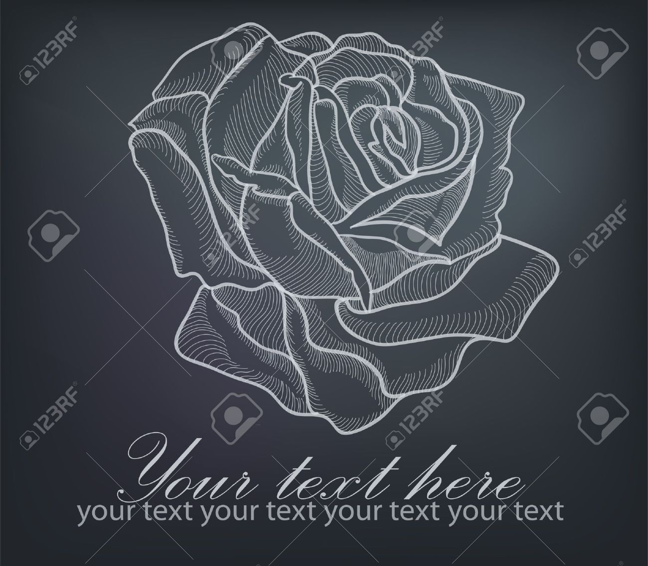 Hand drawing rose card isolated on grey background Stock Vector - 14298657