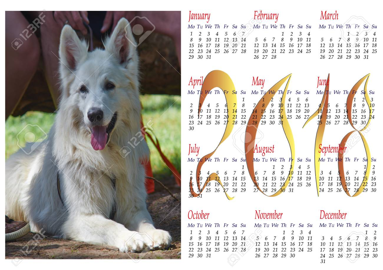 calendar for 2018 with portrait of berger blanc suisse dog clipart stock photo