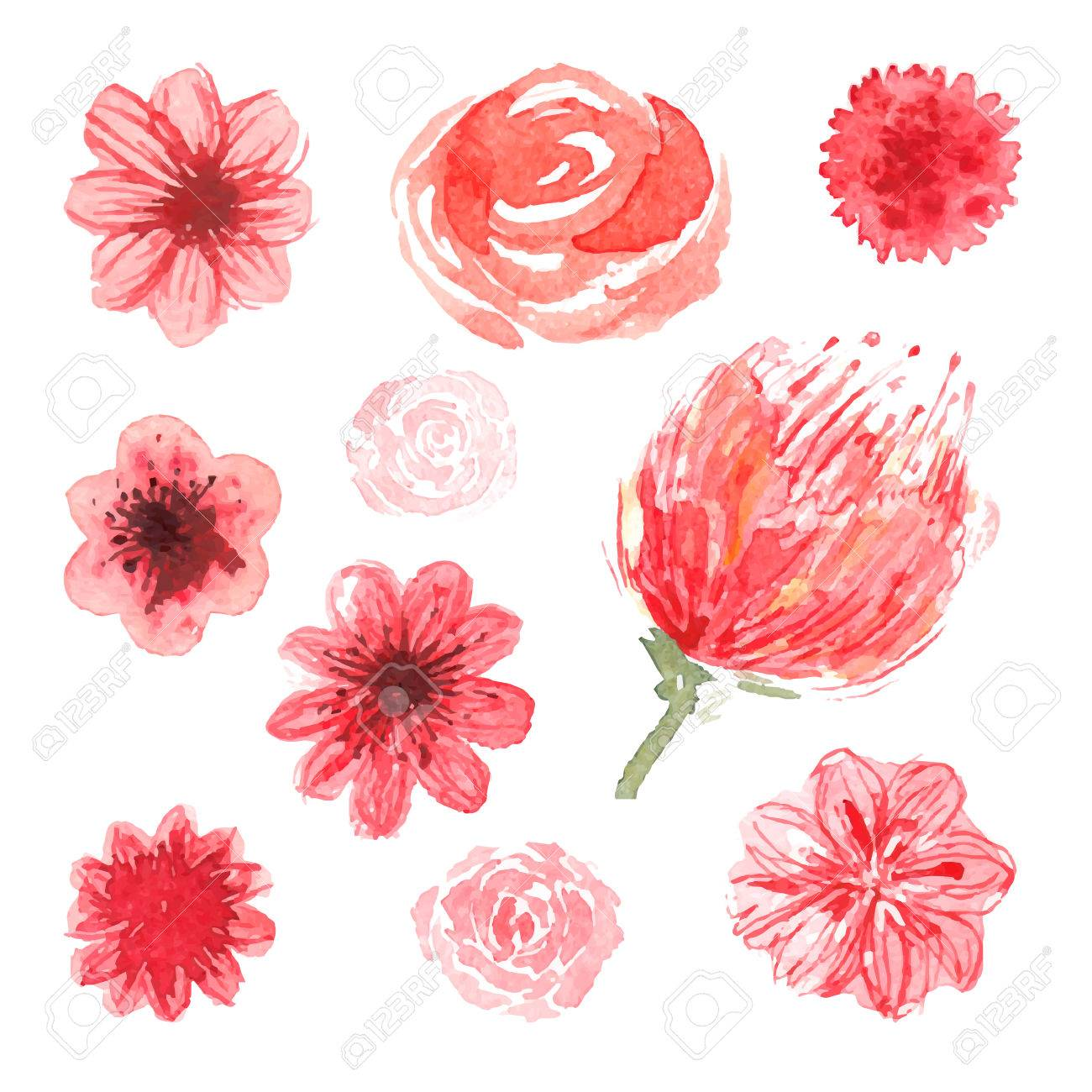 Watercolor Flowers, Vector Floral Collection, Rose, Piones, Pink ...