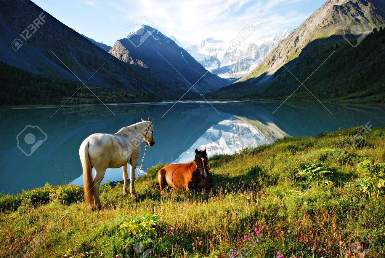 Mountain pasture, horses, lake Ak-kem, Altai, Russia Stock Photo - 2908299