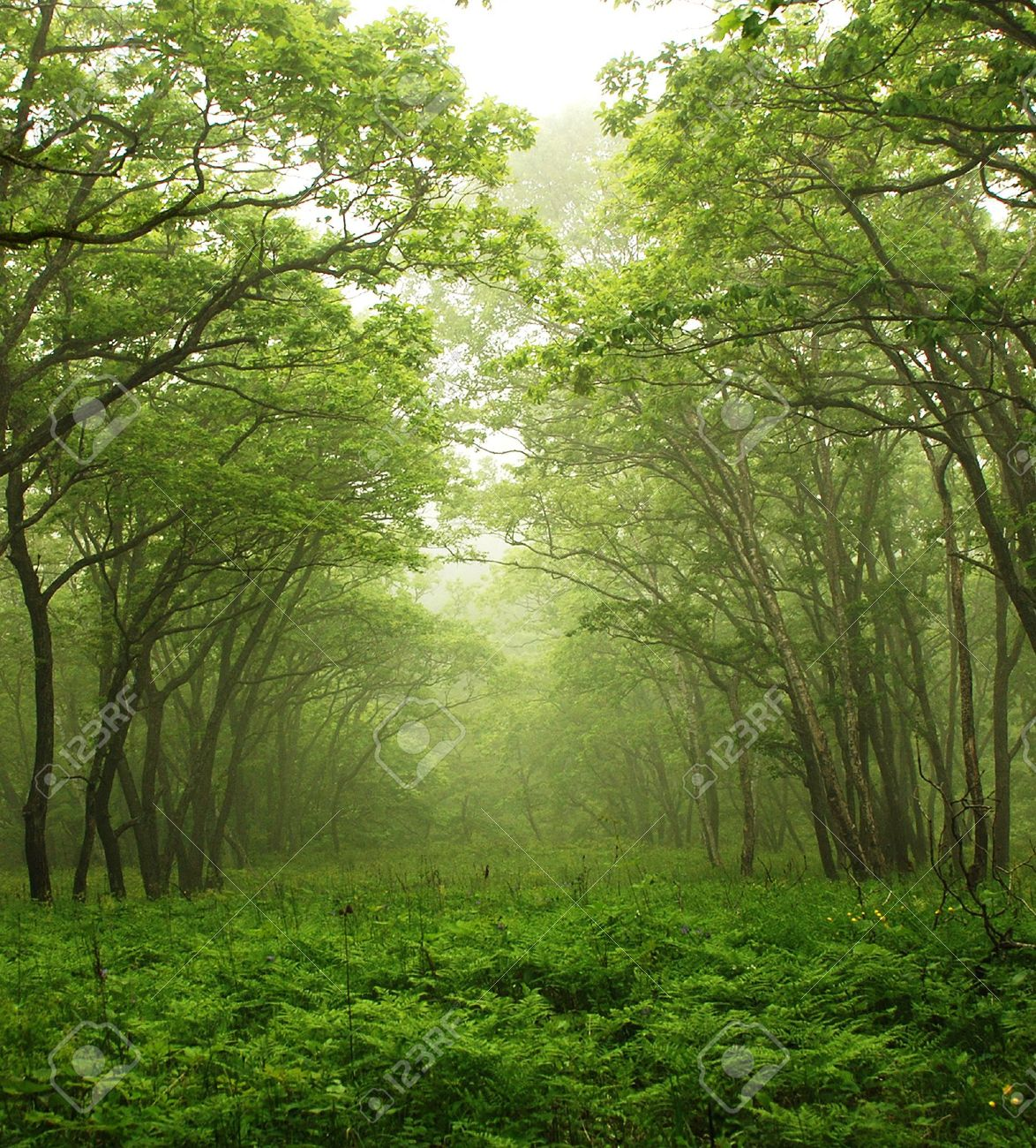 Forest mystic way, Primorye, Russia Stock Photo - 4951342