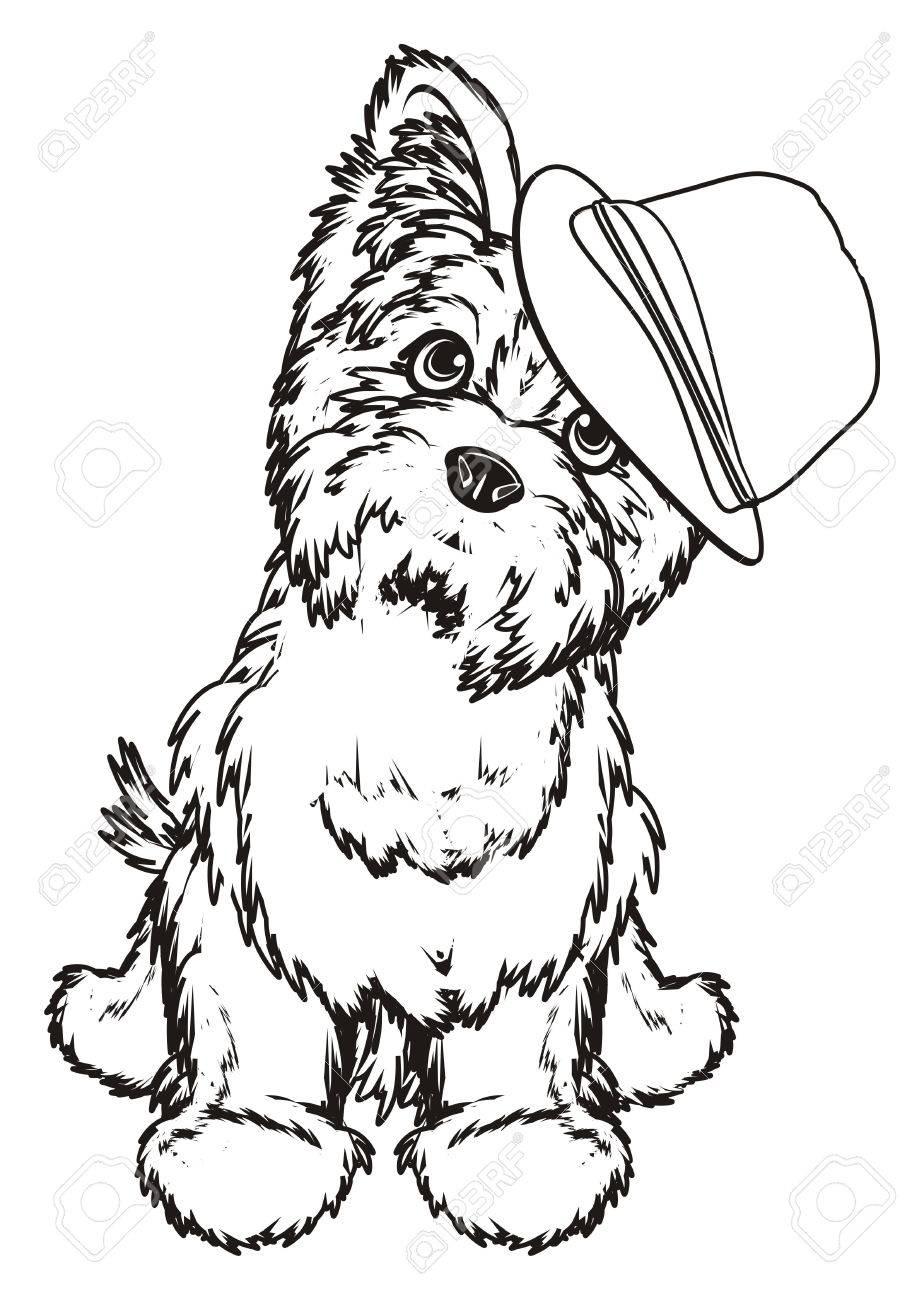 Colorear, Yorkshire Terrier, Niño, En, Sombrero, Sentarse Fotos ...