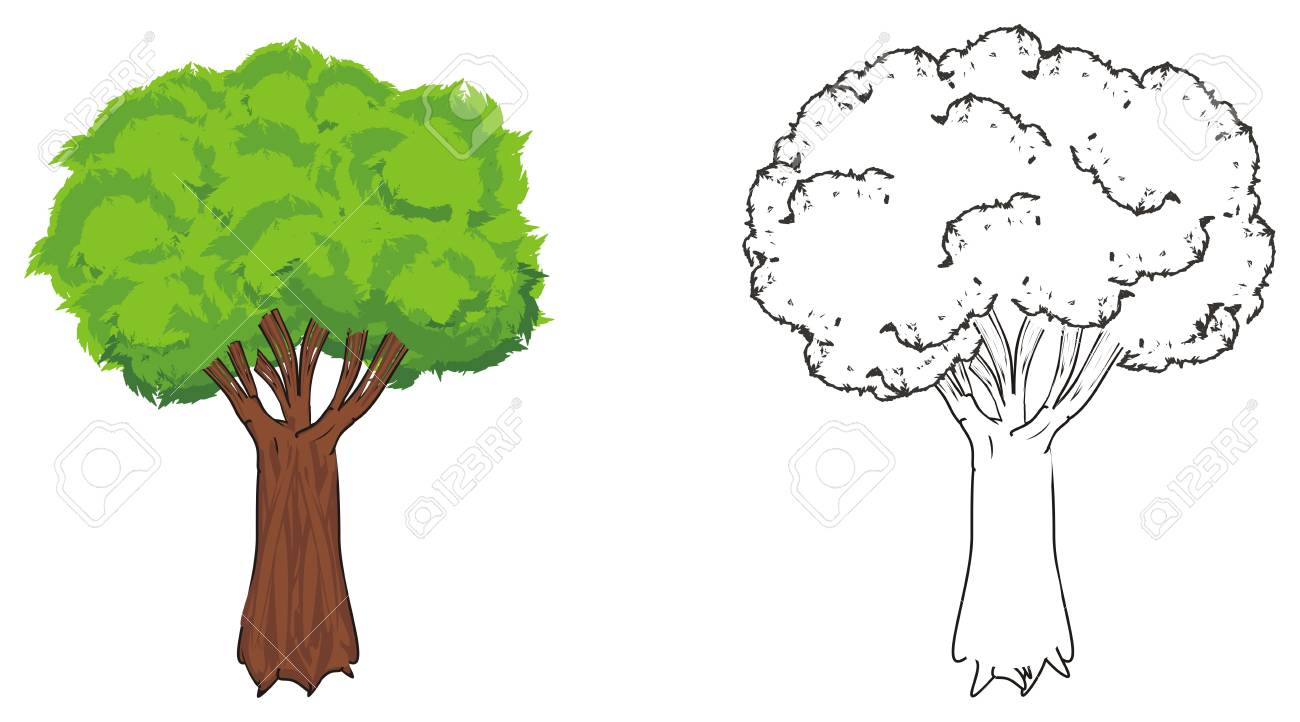 Colored Tree With Coloring Tree Stock Photo, Picture And Royalty ...