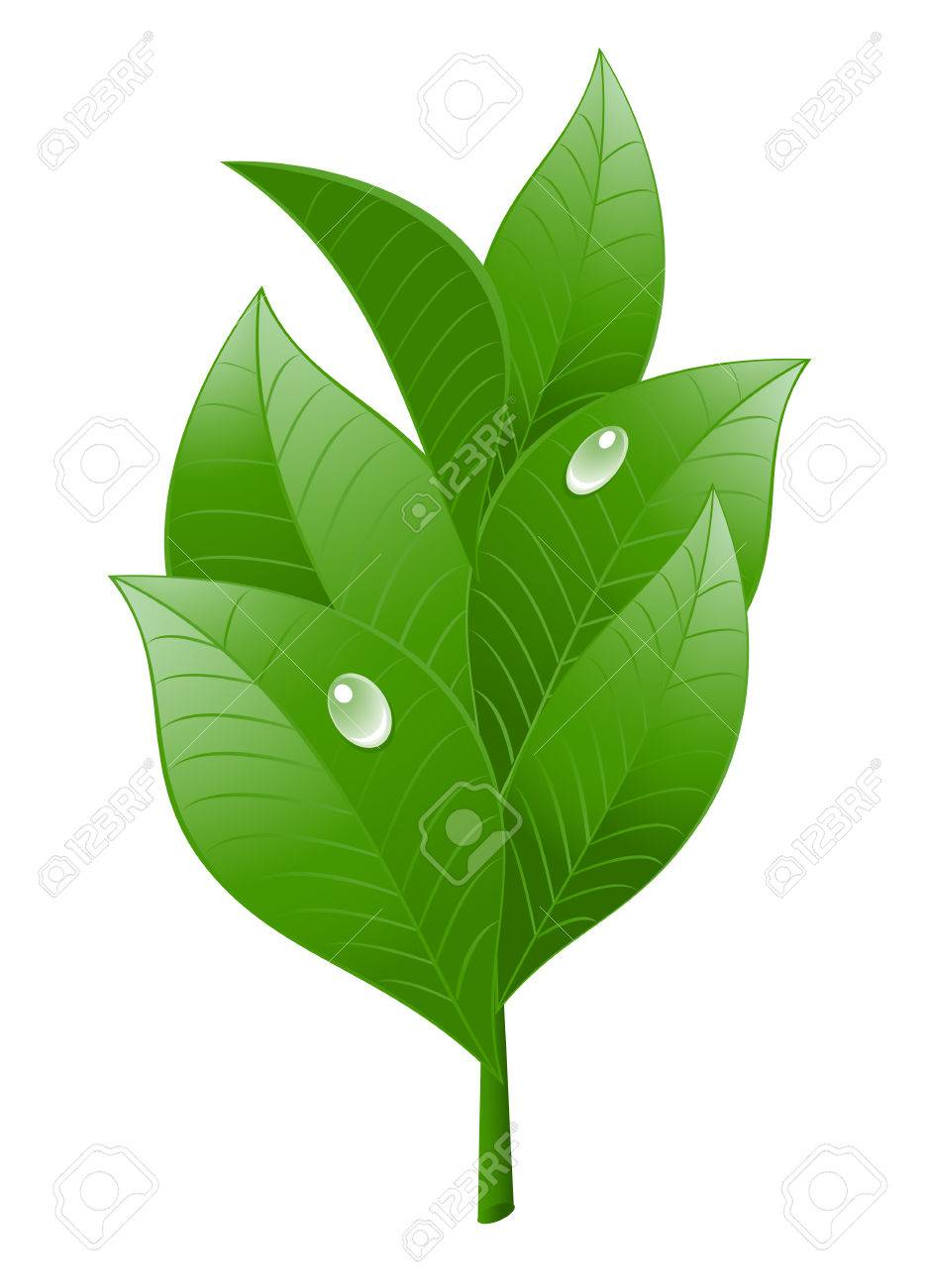 Tea leaf on white background. Vector-Illustration Stock Vector - 4486759