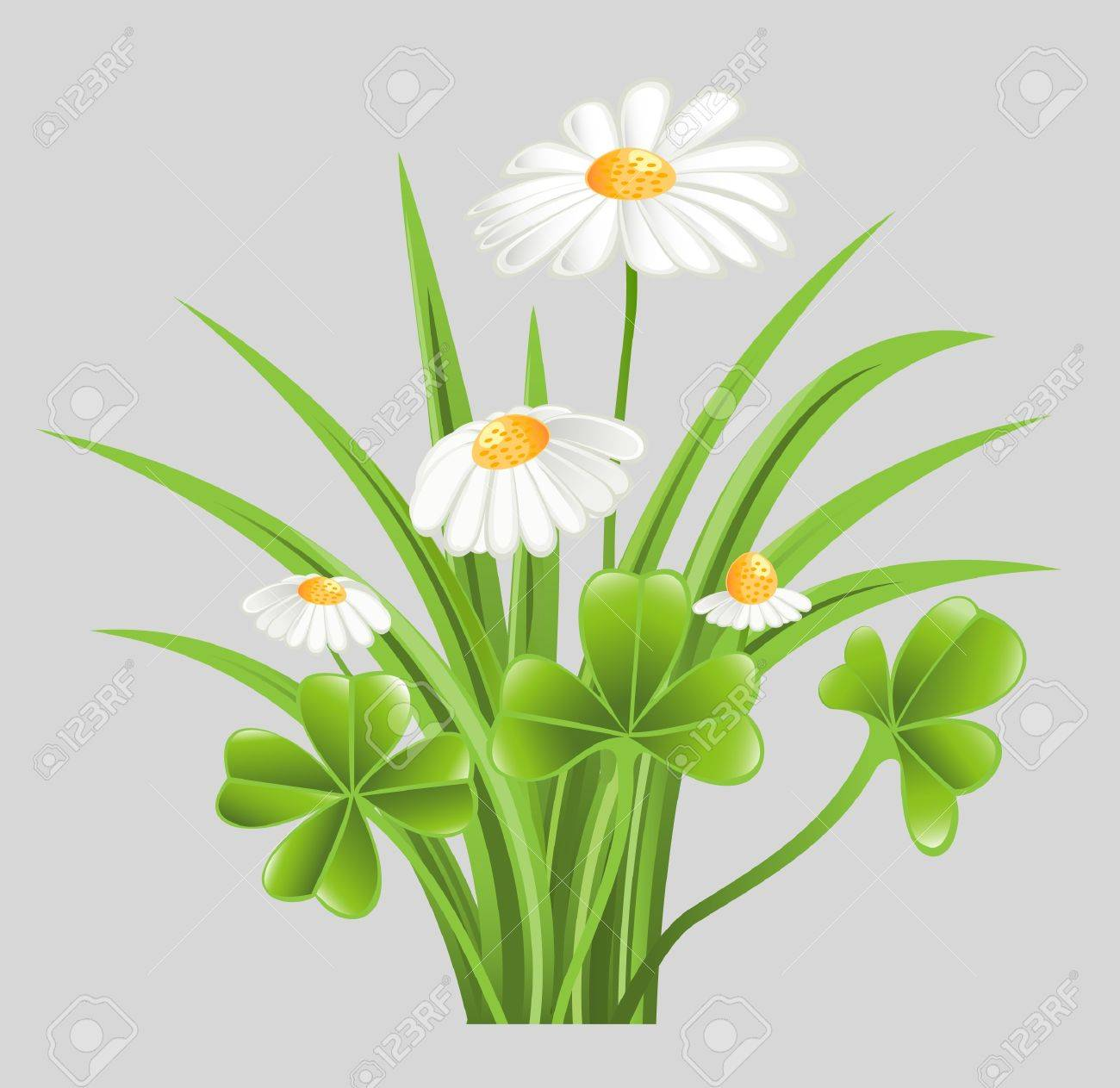 Green grass with clover and camomile flowers Stock Vector - 13216179