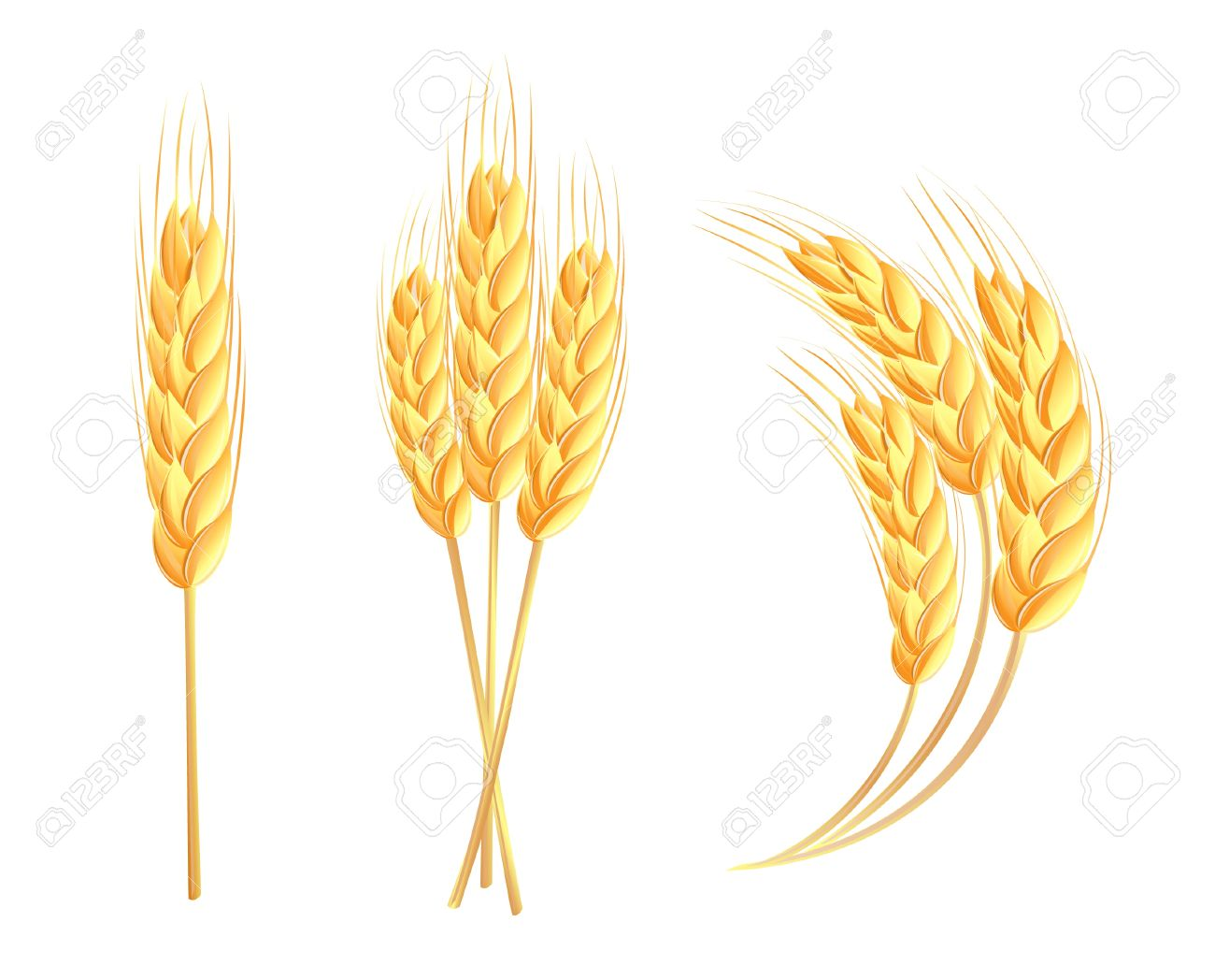 Wheat ears Stock Vector - 14162308