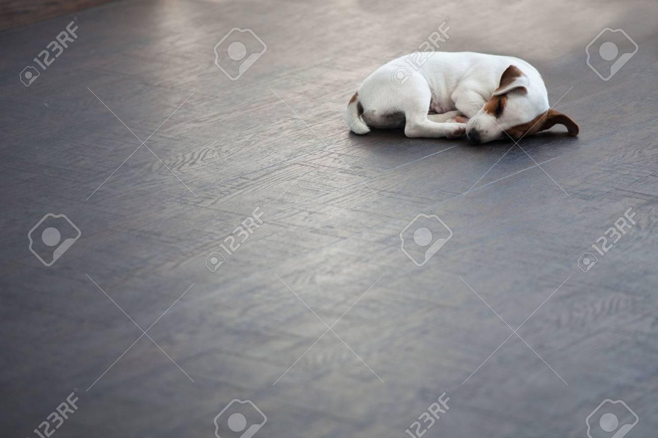Puppy sleeping at warm floor. Dog - 44430063