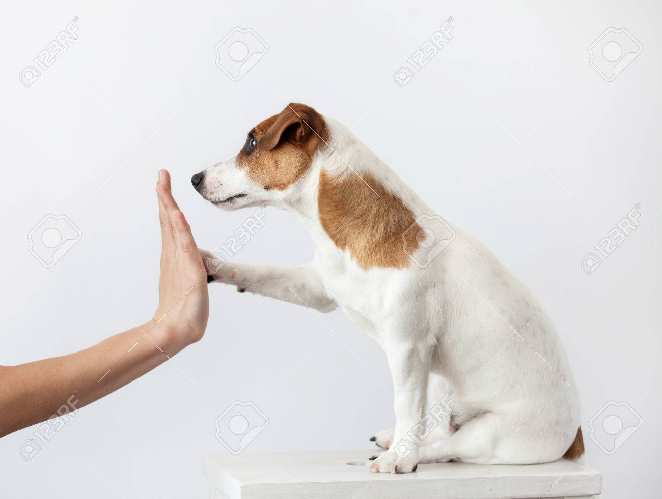 Dog greeting and human. Training puppy. Friendship - 58964398