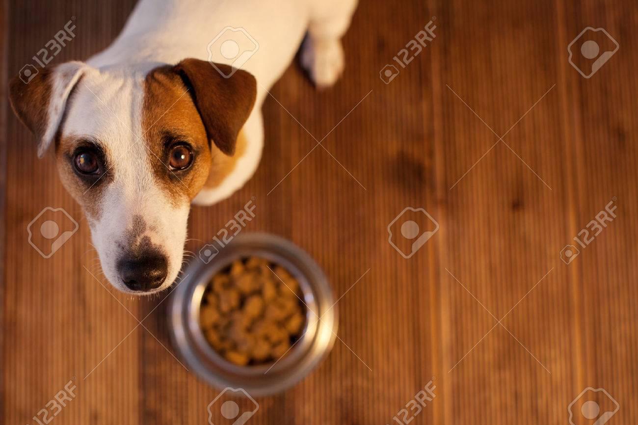 Pet eating food. Dog eats food from bowl - 68982102