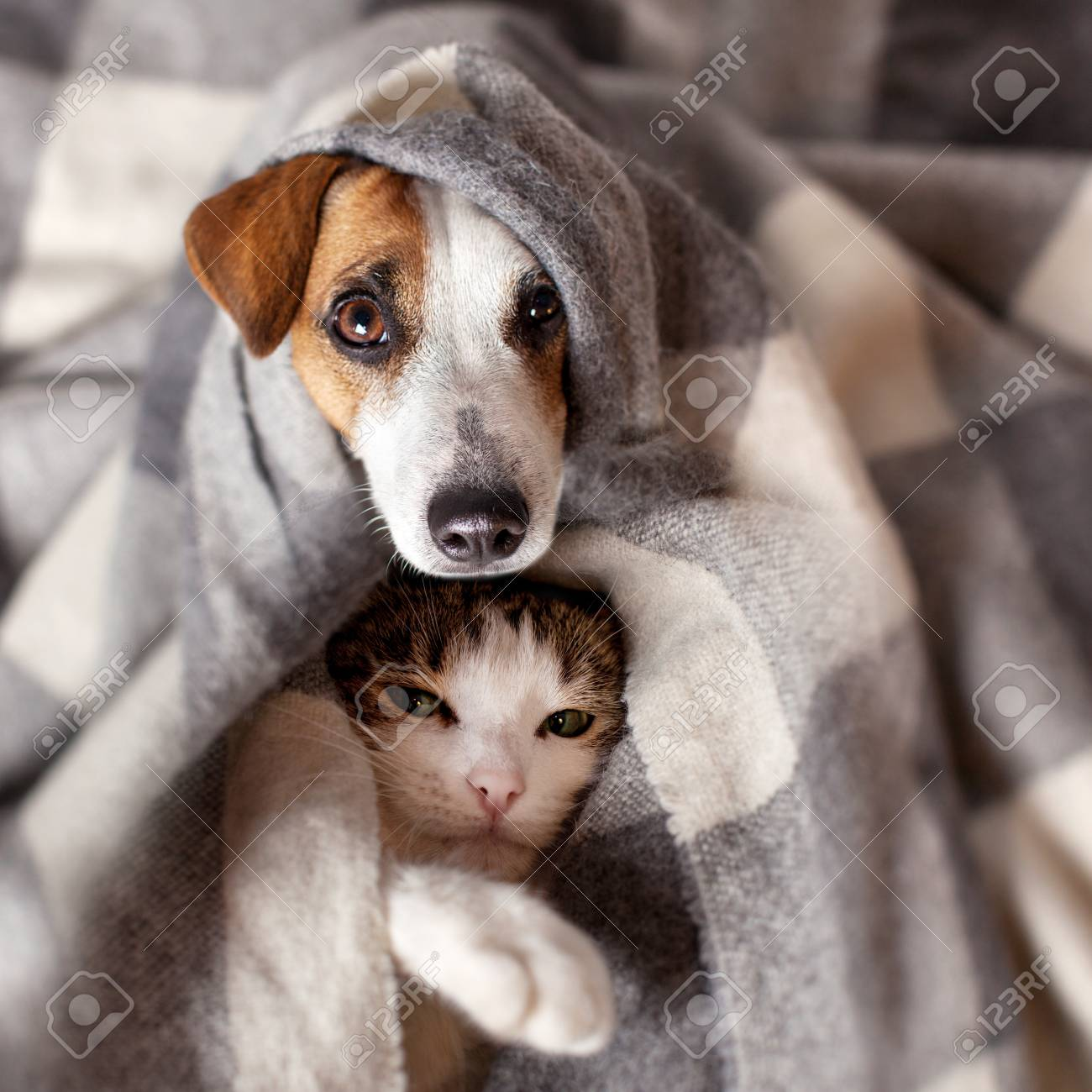 Dog and cat under a plaid. Pet warms under a blanket in cold autumn weather - 87485111