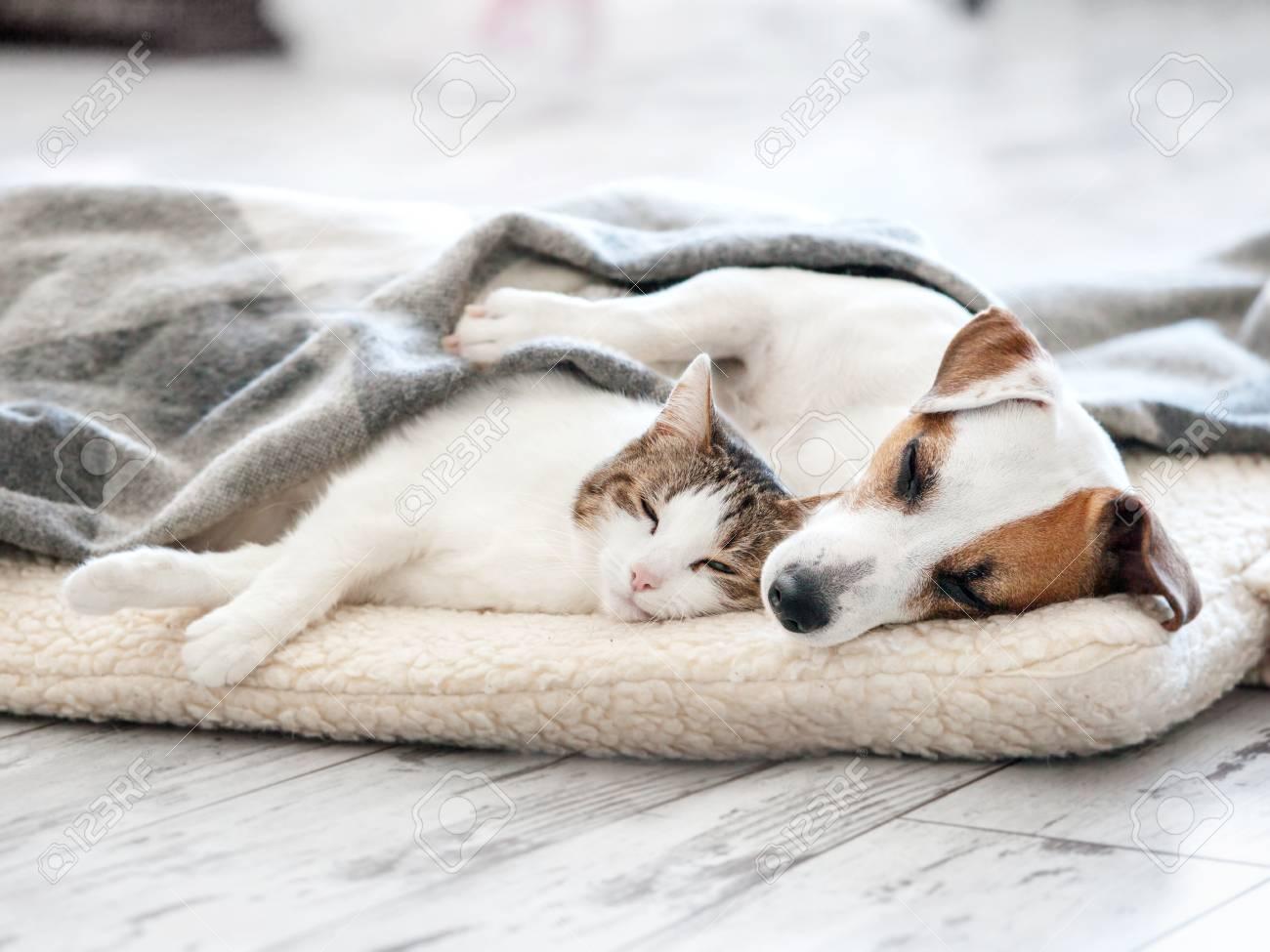 Cat and dog sleeping. Pets sleeping embracing - 101106854