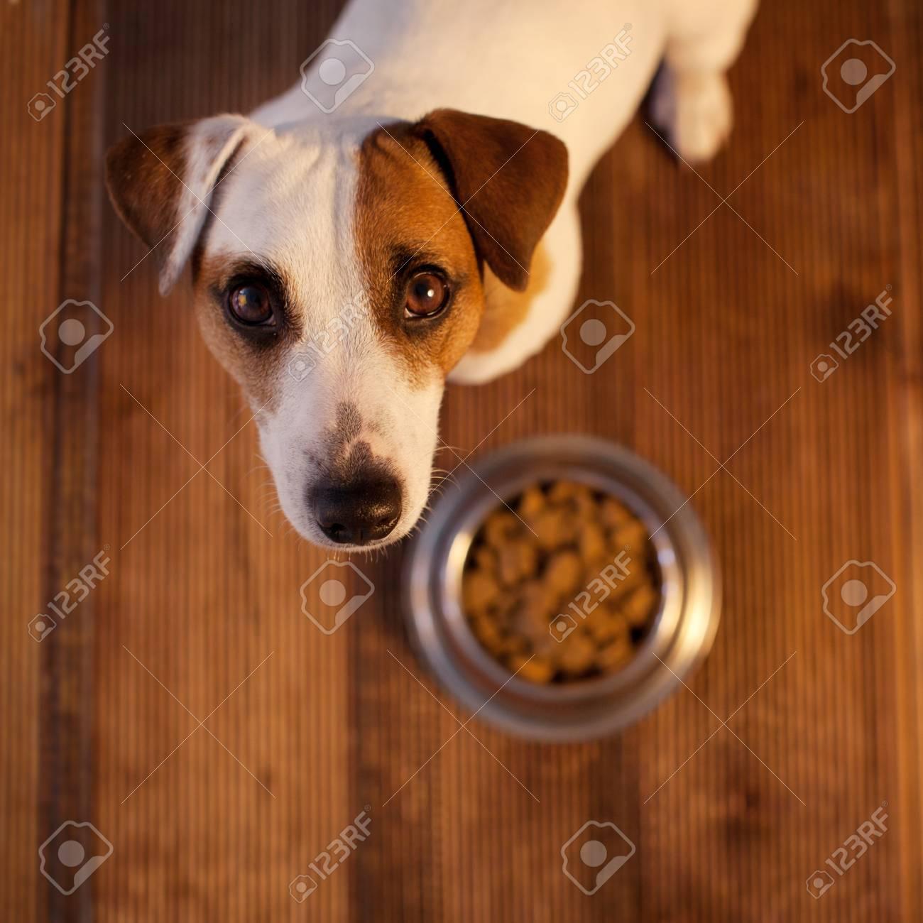 Pet eating food - 125958817