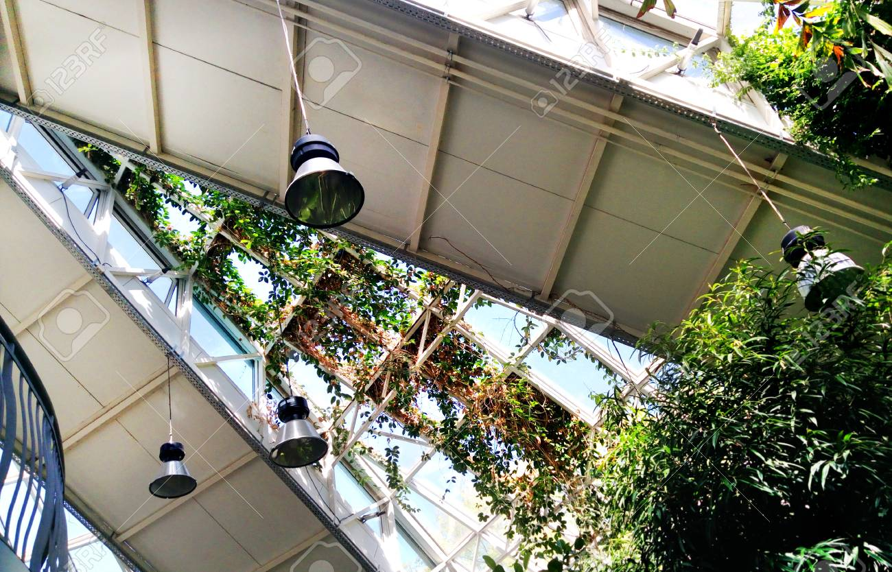Garden plants in the greenhouse. Conservatory (orangery) building architecture of Minsk Belarus. Dynamic solar sunny showing the power of nature. - 101332083