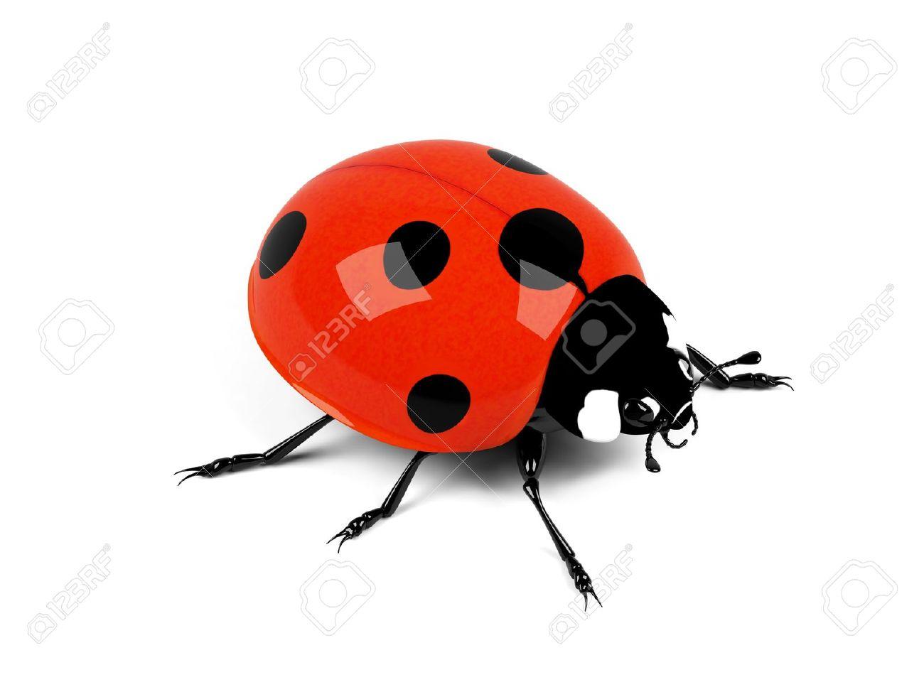 Ladybird on a white background Stock Photo - 15536361