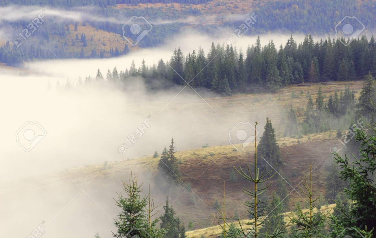 mist on a mountain spruce forest in the morning Stock Photo - 16871196