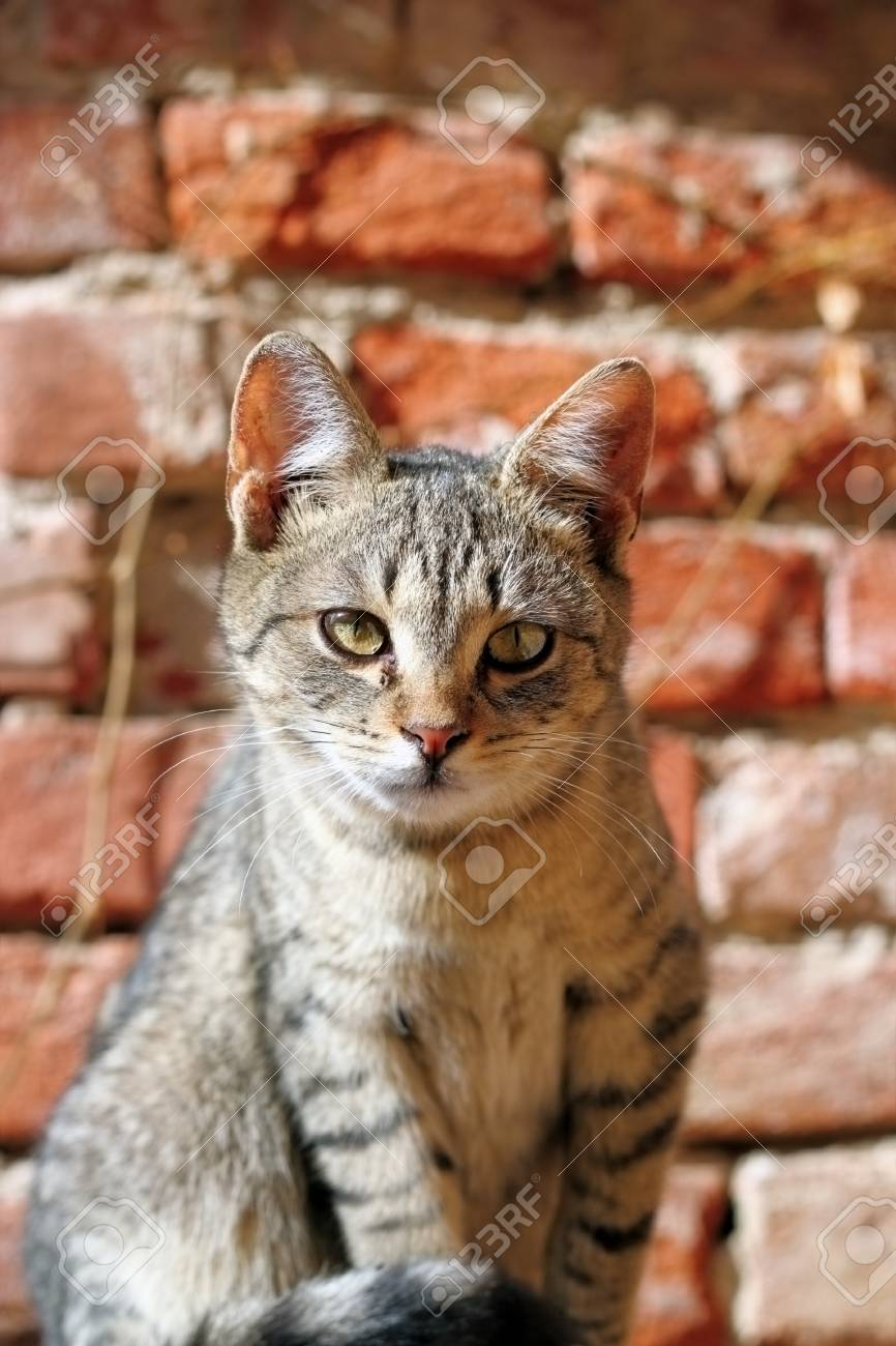 portrait of a curious young kitten looking at the camera Stock Photo - 18081892