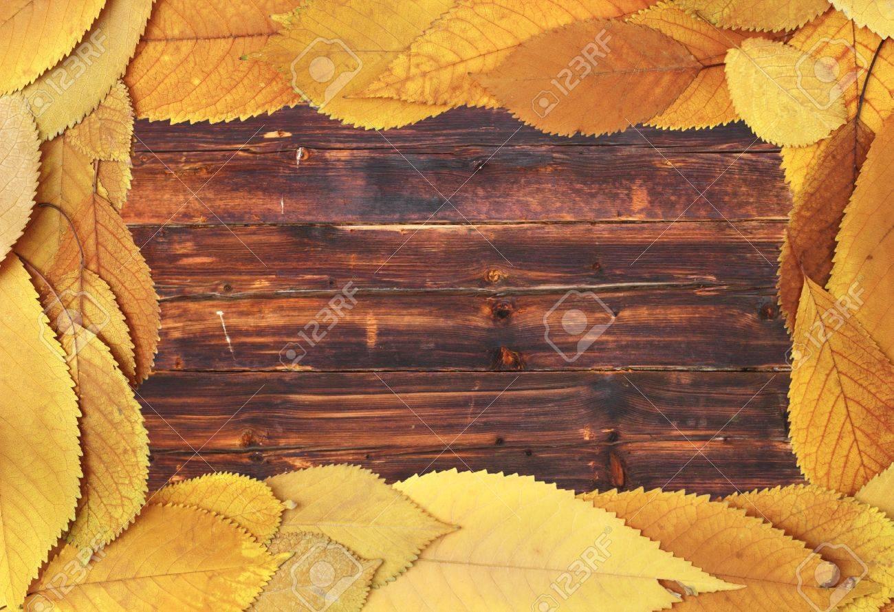 Goldene Farbe Verblasst Kirsche Blätter Bilden Einen Rahmen Auf ...