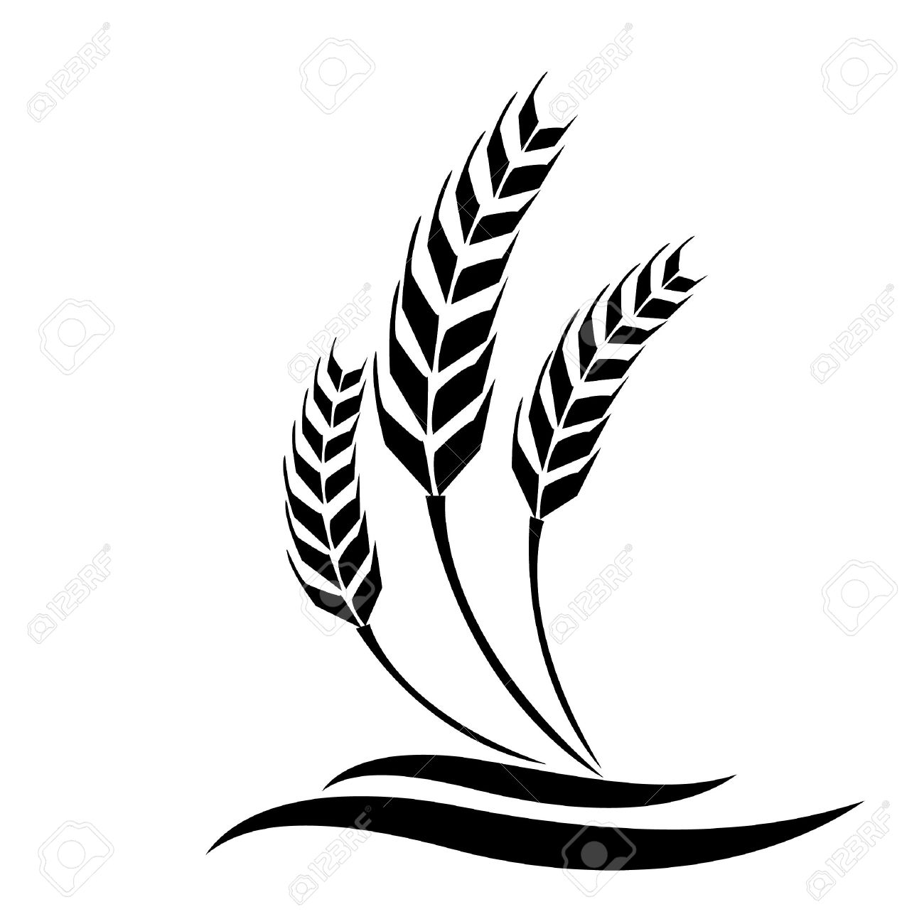 wheat vector royalty free cliparts vectors and stock rh 123rf com wheat vector art free download wheat vector download