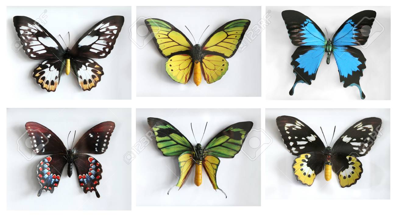 Set of beautiflu Butterfly studio shot Stock Photo - 22259395