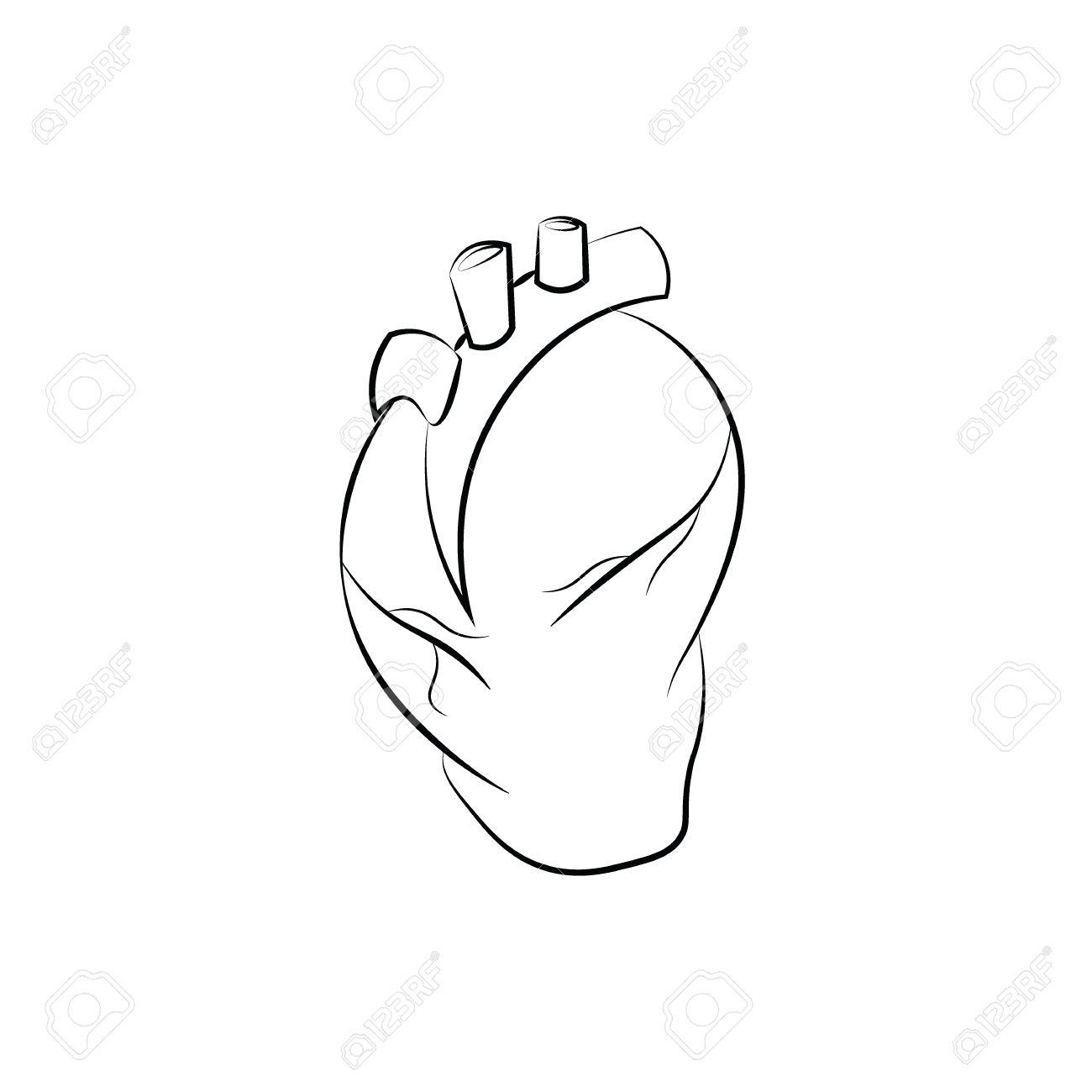 La Anatomía De órganos Dibujo Lineal Del Corazón Ilustraciones ...