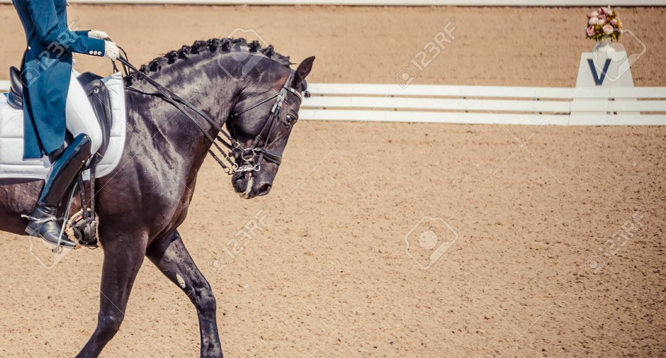 Dressage Horse And Rider Black Horse Portrait During Dressage Stock Photo Picture And Royalty Free Image Image 94502627