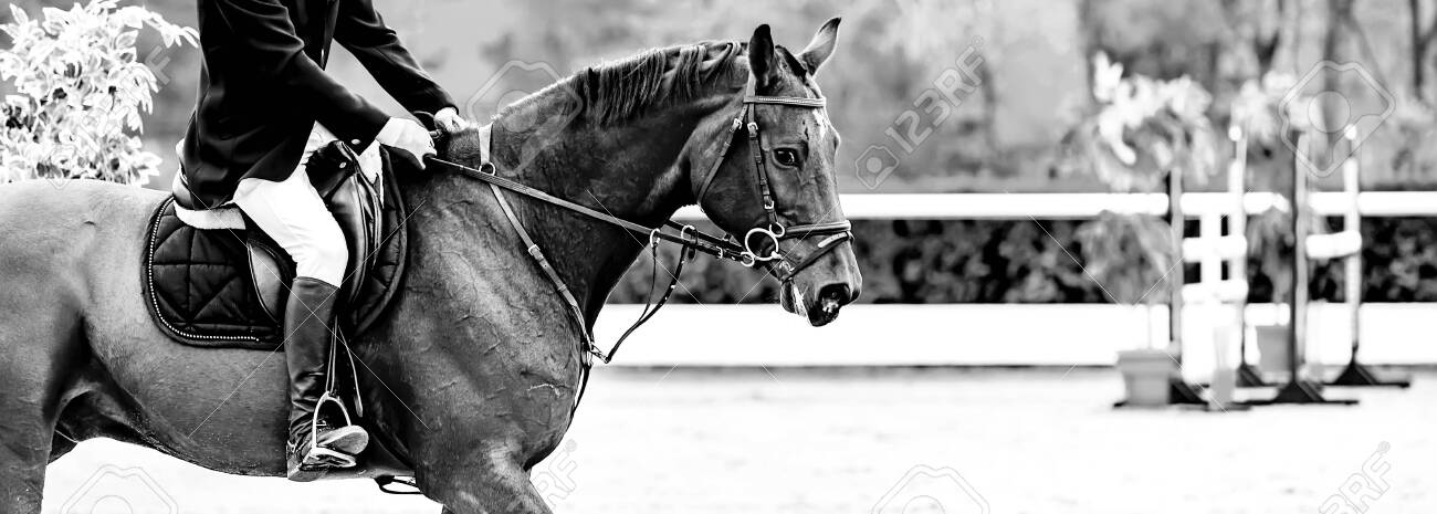Rider on sorrel horse in jumping show, equestrian sports, black and white. Brown horse and man in uniform going to jump. Horizontal web header or banner design. - 137972108