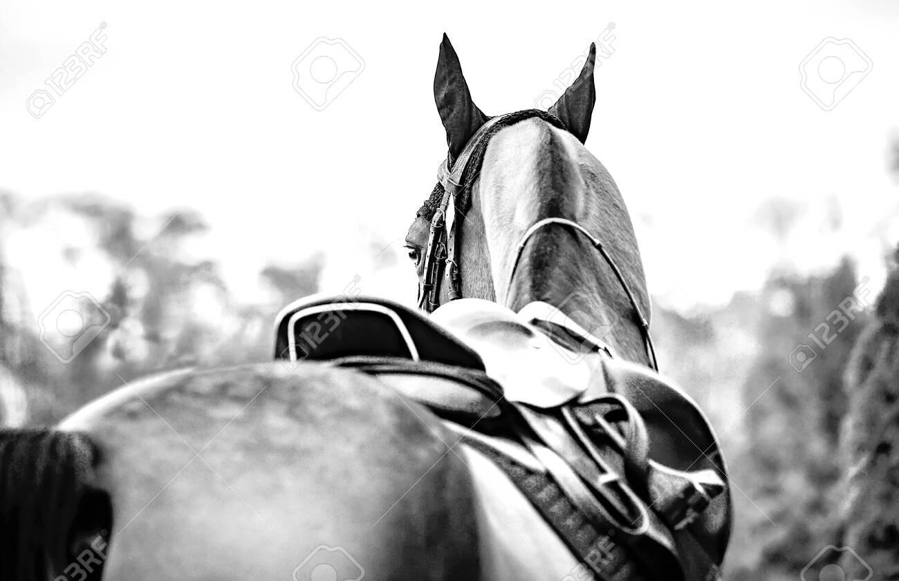 Black Horse Leather Saddle Black Saddle Blanket And Stirrups Stock Photo Picture And Royalty Free Image Image 137971972