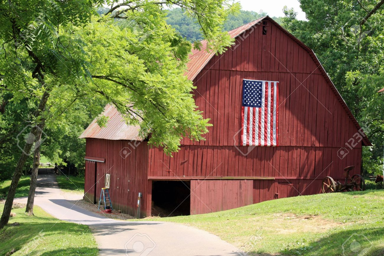 Cow on green pasture with red barn with grain silo royalty free stock - Red Barn Attractive New Red Barn With American Flag Stock Photo