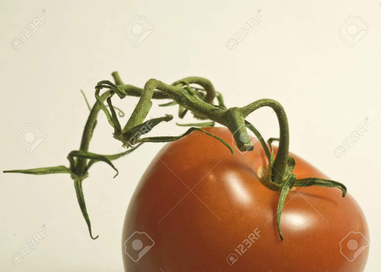 vine red tomato Stock Photo - 8278847
