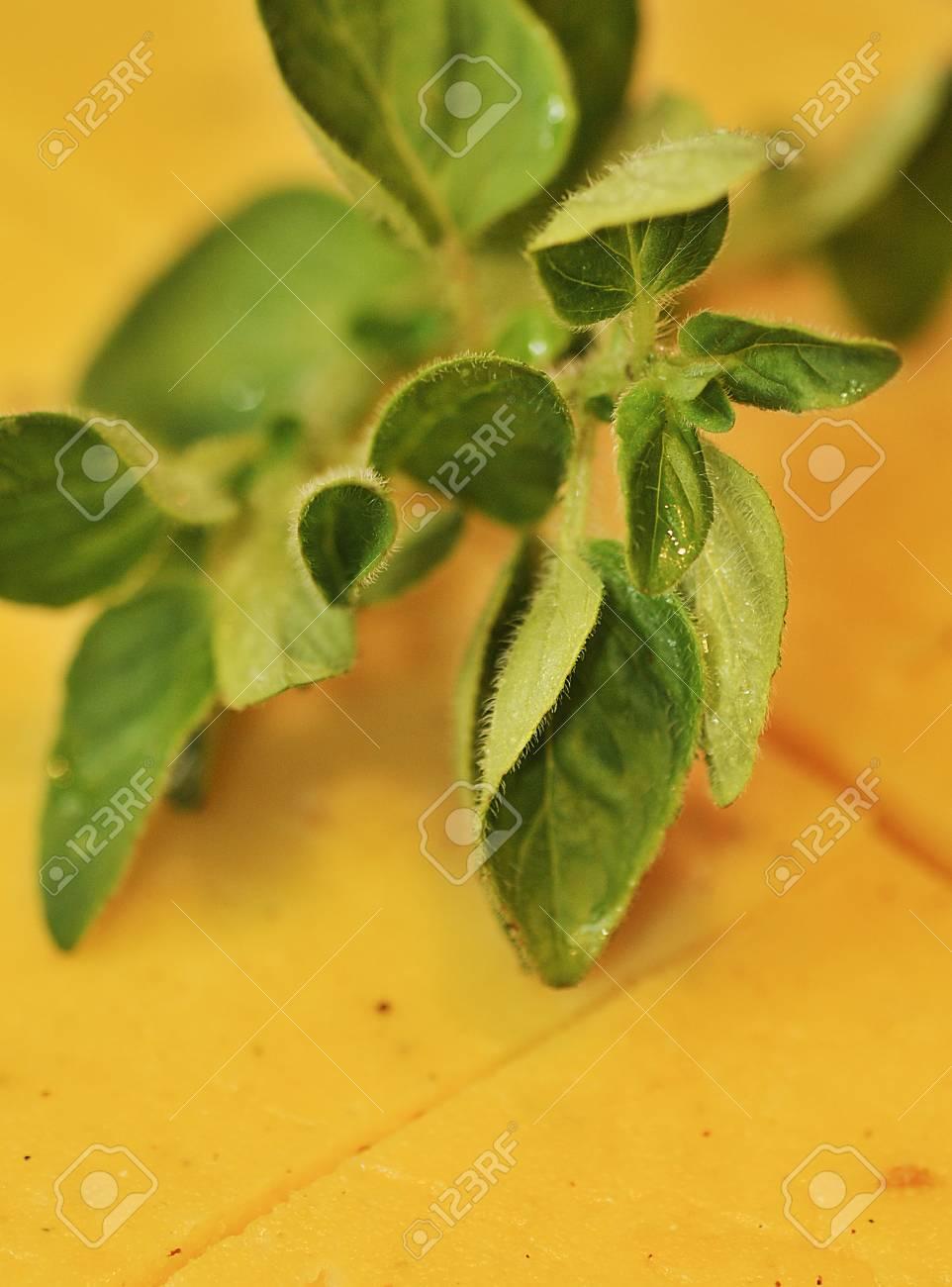 polenta garnished with oregano Stock Photo - 8278858