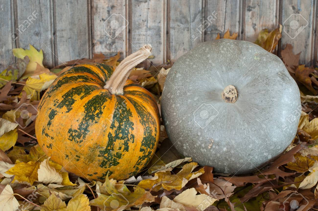 Orange and grey pumpkins-photography Stock Photo - 12673769