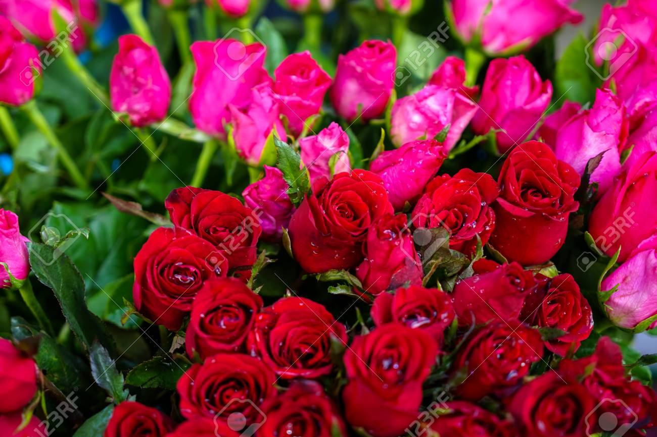 - Bunch Of Fresh Beautiful Bright Red And Pink Color Rose Flower