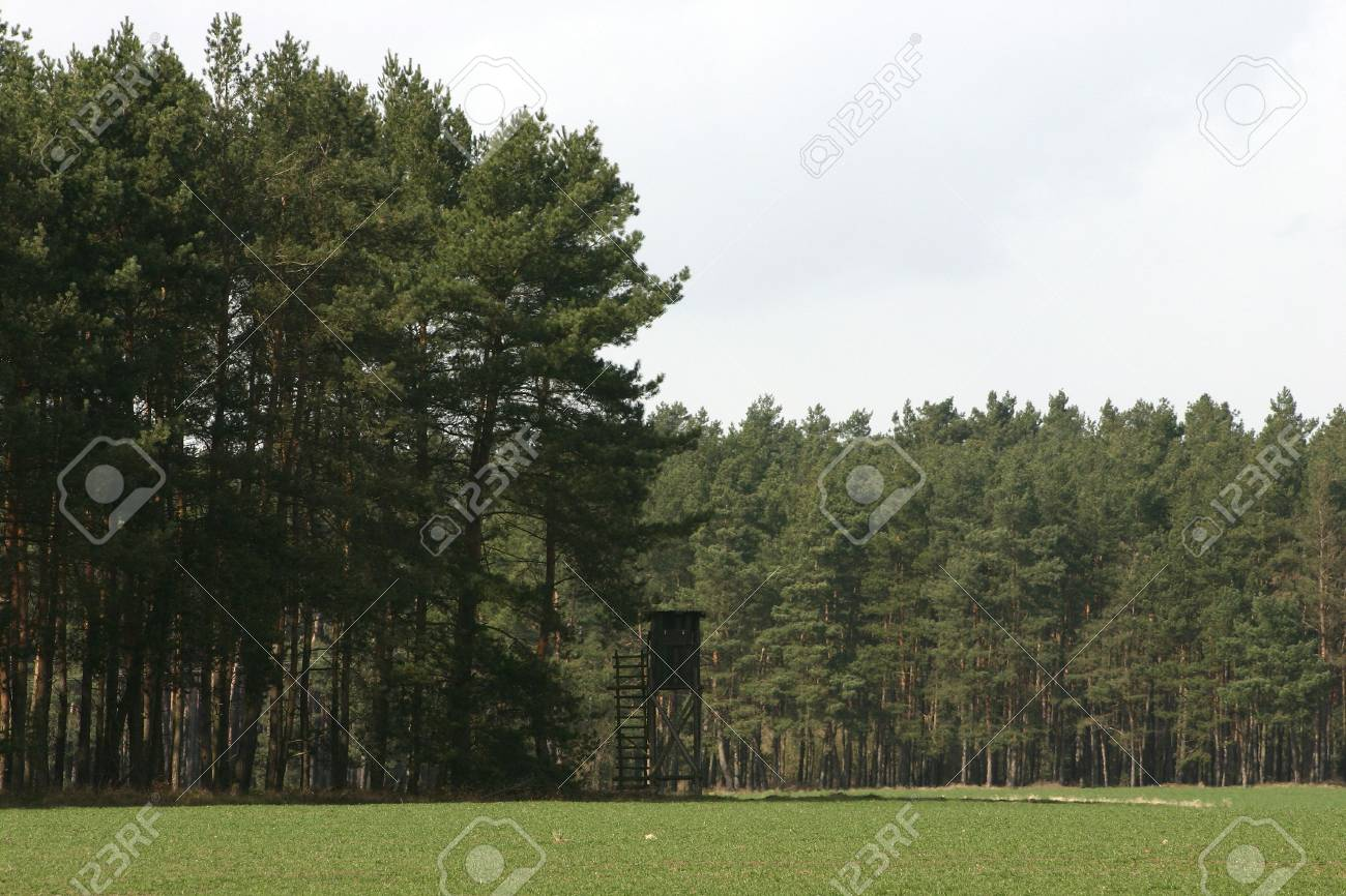 Hunt raised hide in the forest Stock Photo - 7348864